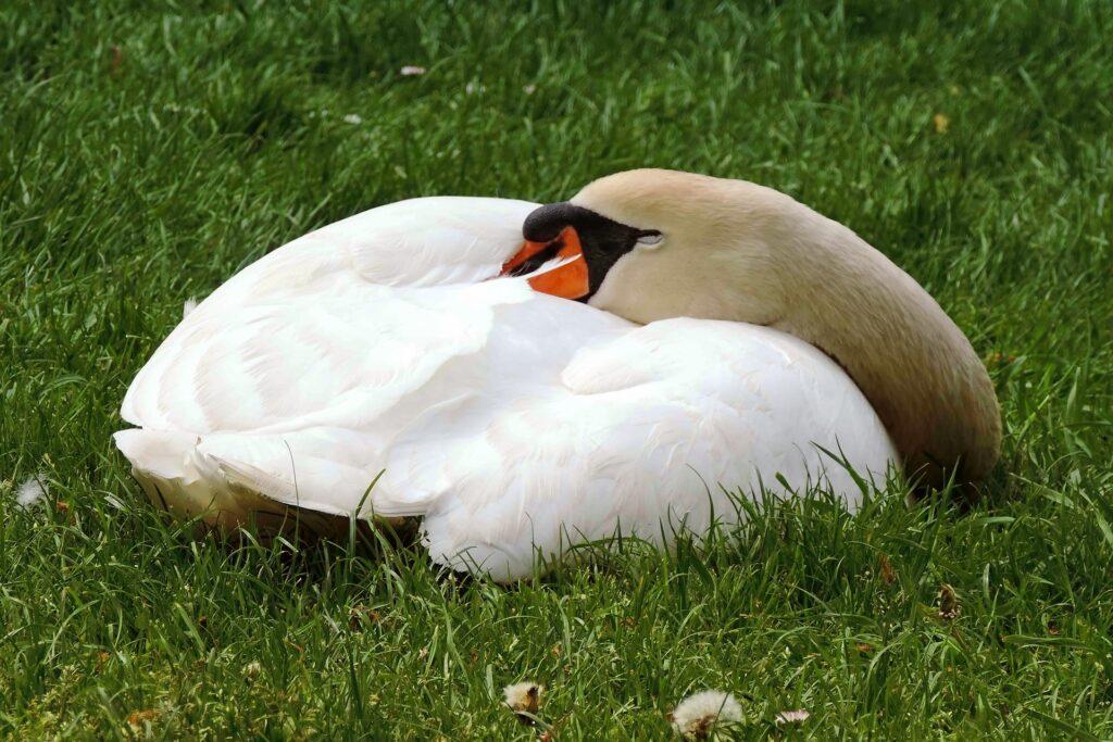 Зимняя спячка у птиц