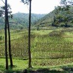 Руанда — политическая история
