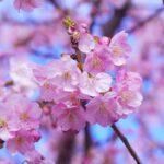 Фитонциды и взаимодействие цветов