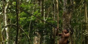 Лягушка кокои опаснее пятидесяти ягуаров