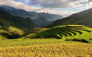 Вьетнам зимой - погода и традиции